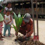 plantation cocotier fm